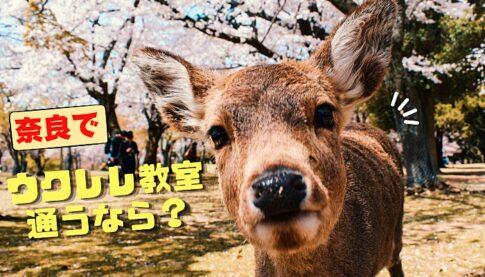 ウクレレ教室奈良